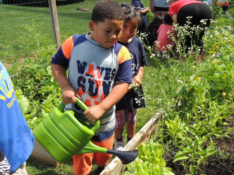 boy watering a garden